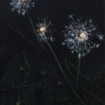Dandelions 02252916, oil on canvas